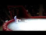 Цирк. Неуправляемые собаки